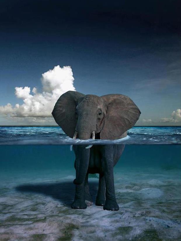 Слон у воді