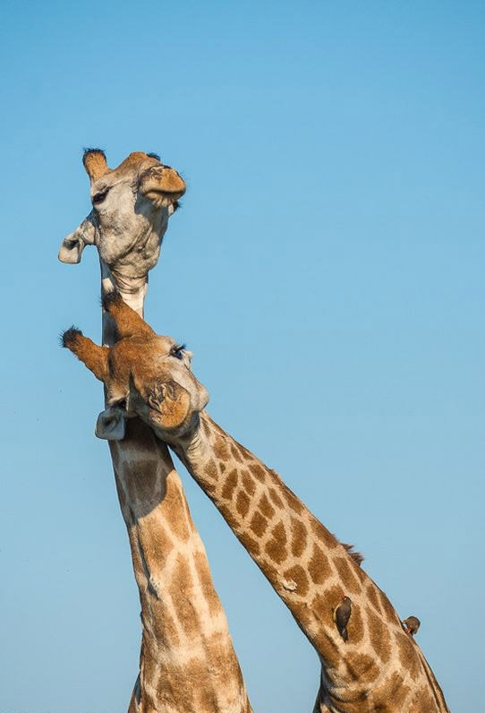 Як дружать тварини
