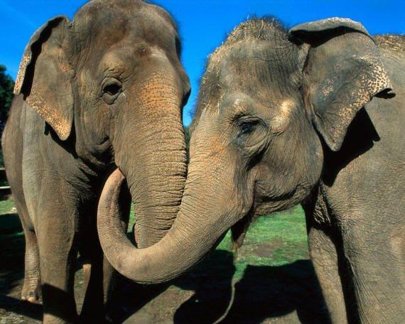 Його величнысть слон
