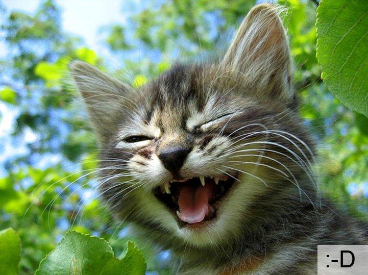 Смешные коты, фото 3