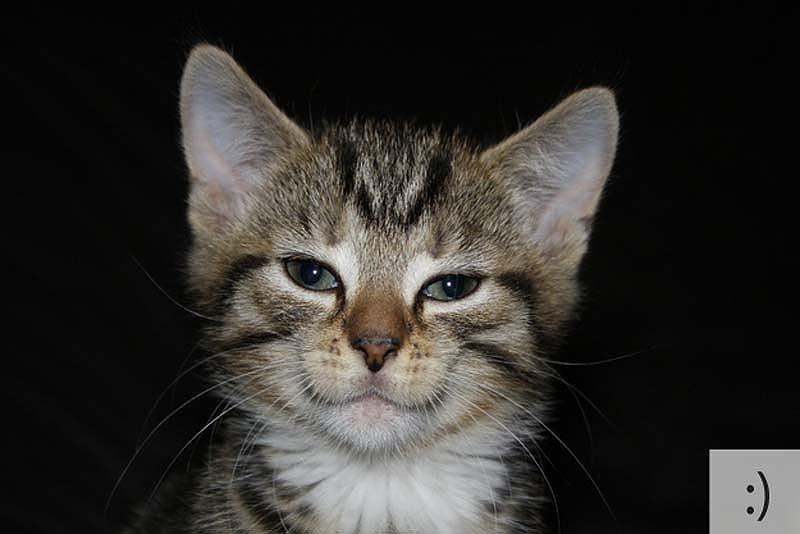 Смішні коти, фото 1