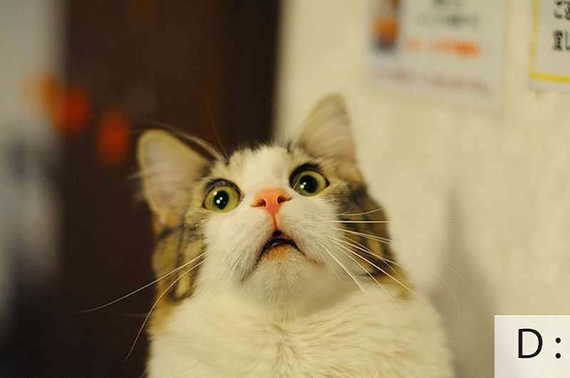 Смешные коты, фото 9