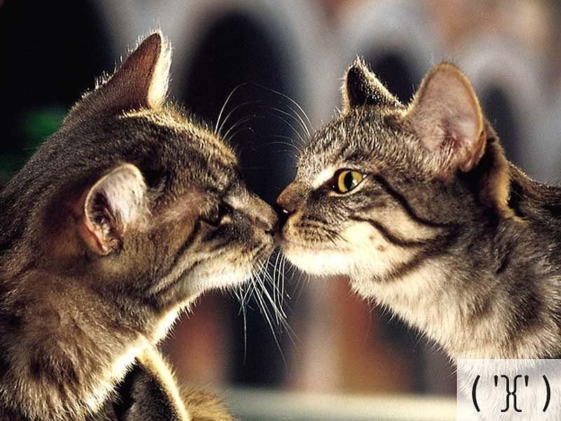 Смешные коты, фото 6