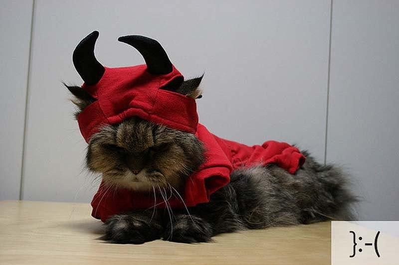 Смішні коти, фото 11