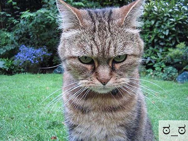 Смешные коты, фото 12