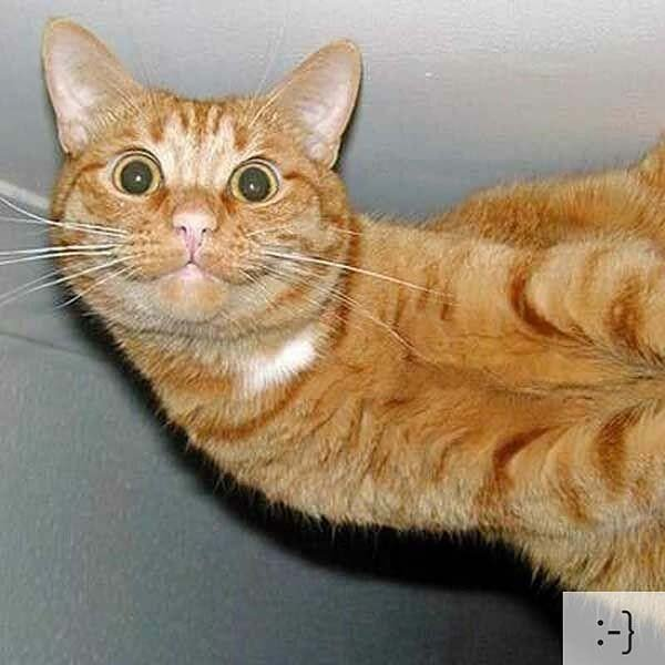 Смешные коты, фото 13