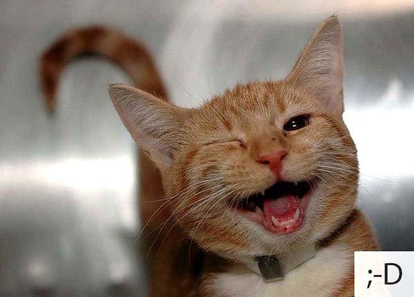 Смешные коты, фото 7