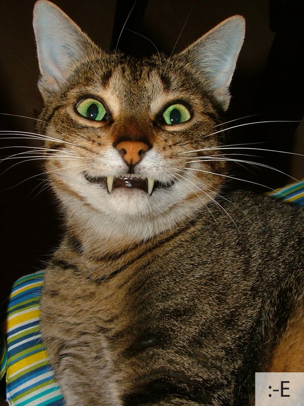 Смішні коти, фото 21
