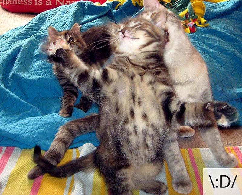 Смешные коты, фото 15
