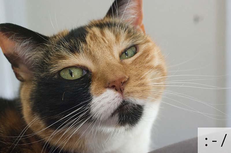 Смешные коты, фото 8