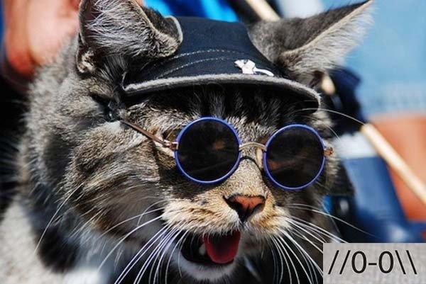 Смешные коты, фото 19