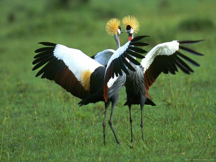 Самые красивые птицы