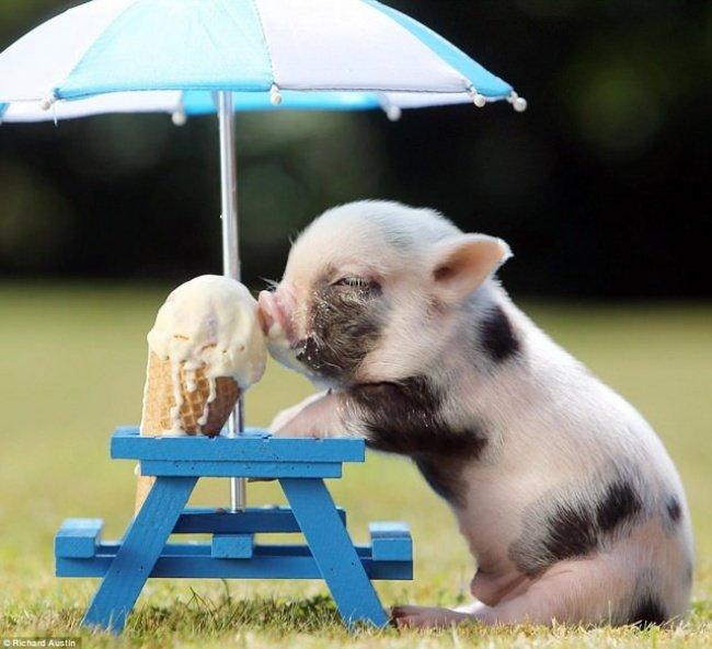 Фотографії милих тварин