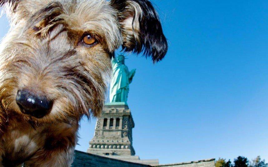 Дивовижні тварини. Оскар - собака мандрівник, фото 4
