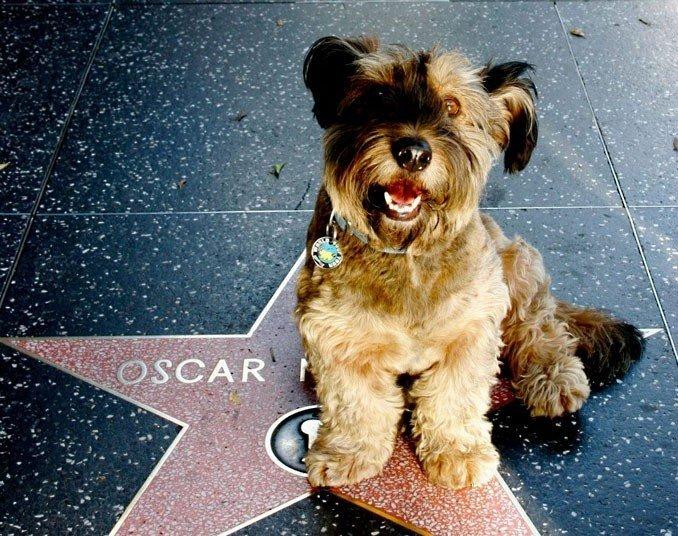Удивительные животные. Оскар - собака путешественник, фото 12