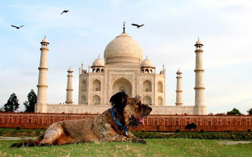Дивовижні тварини. Оскар - собака мандрівник, фото 10
