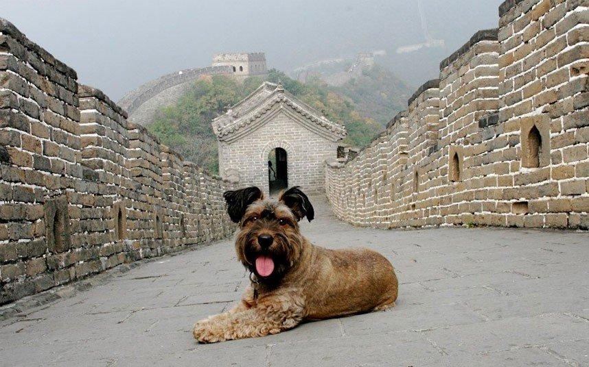 Удивительные животные. Оскар - собака путешественник, фото 14