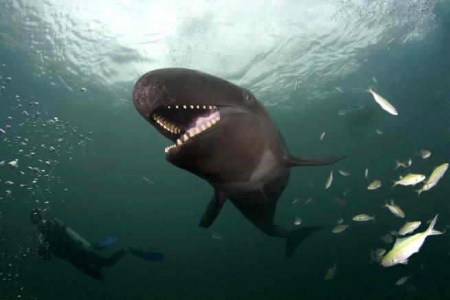Улыбающийся кит-косатка по кличке Смайлик - фото 3