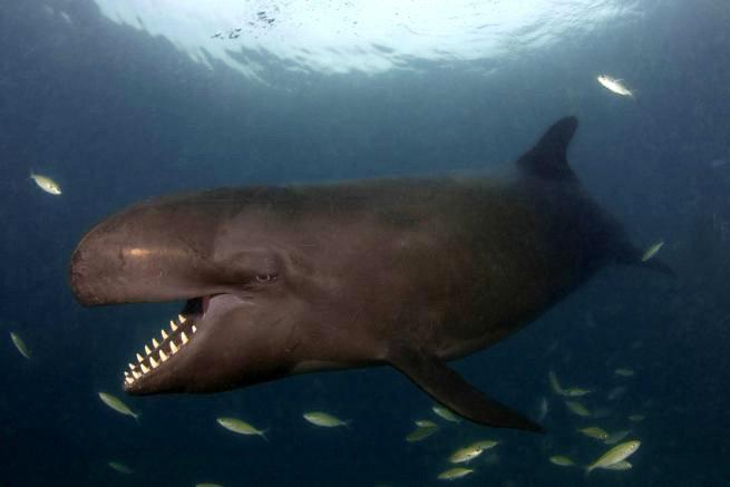 Улыбающийся кит-косатка по кличке Смайлик - фото 5