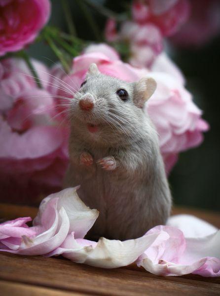 Факты о мышах