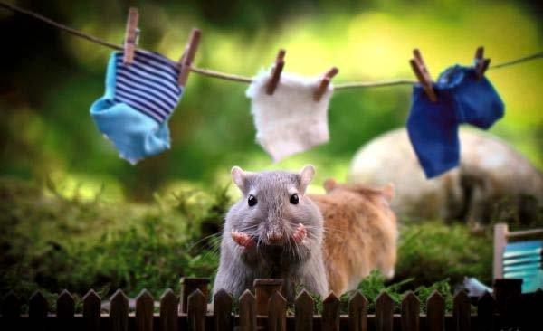 Факти про мишей