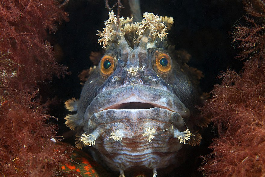 У підводному царстві