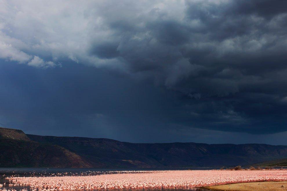 В країні рожевих фламінго