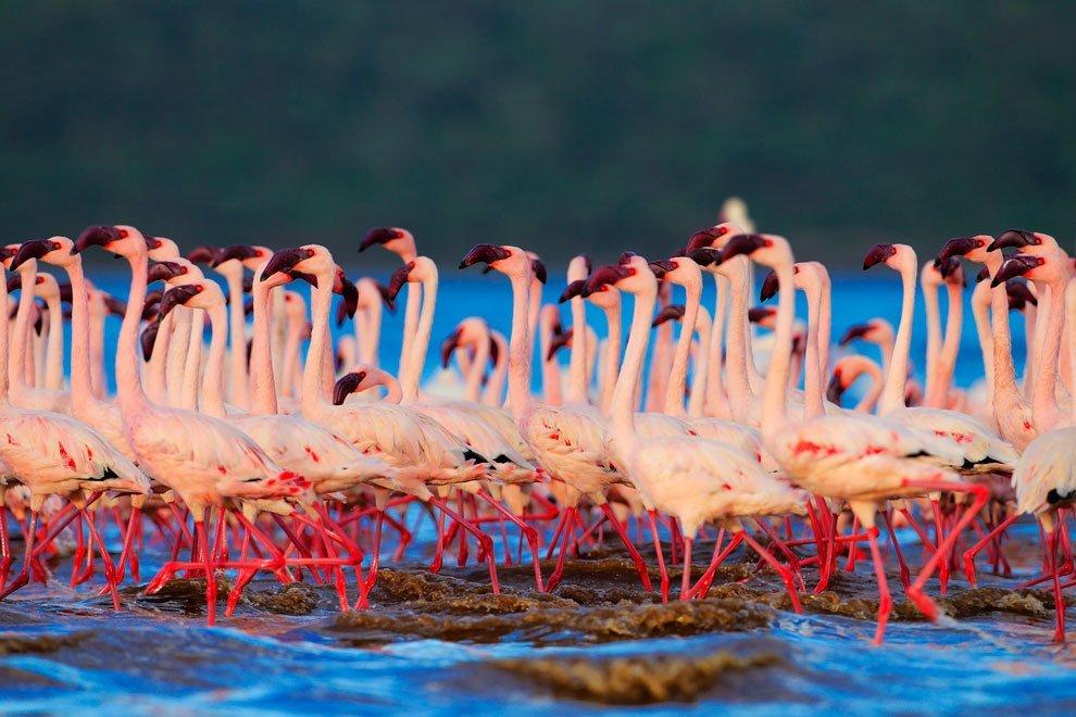 В стране розовых фламинго