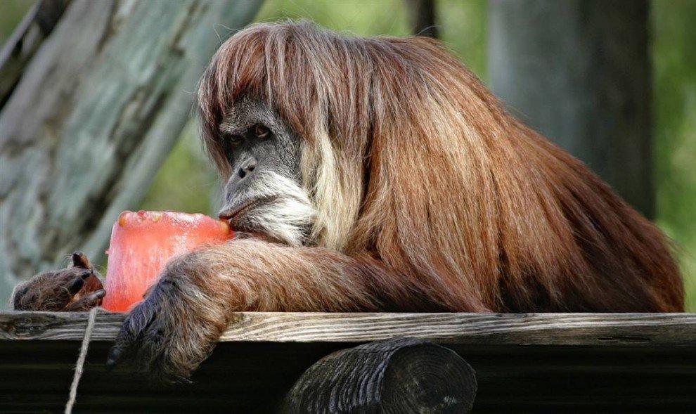 Спека в зоопарках