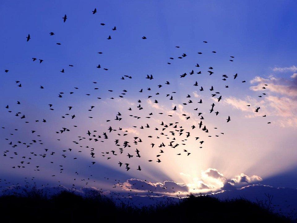 Зграя птахів