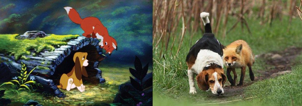 Прототипы героев Дисней - Лис и Пес