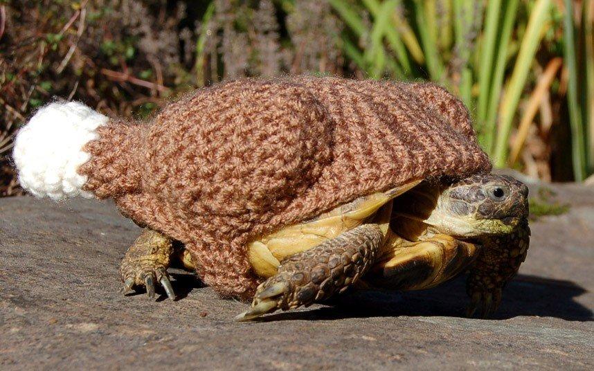 Вязаные костюмы для черепах фото 7