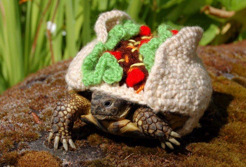Вязаные костюмы для черепах фото 10, хот-дог