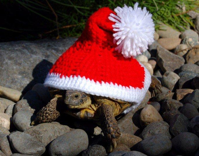 Вязаные костюмы для черепах фото 1