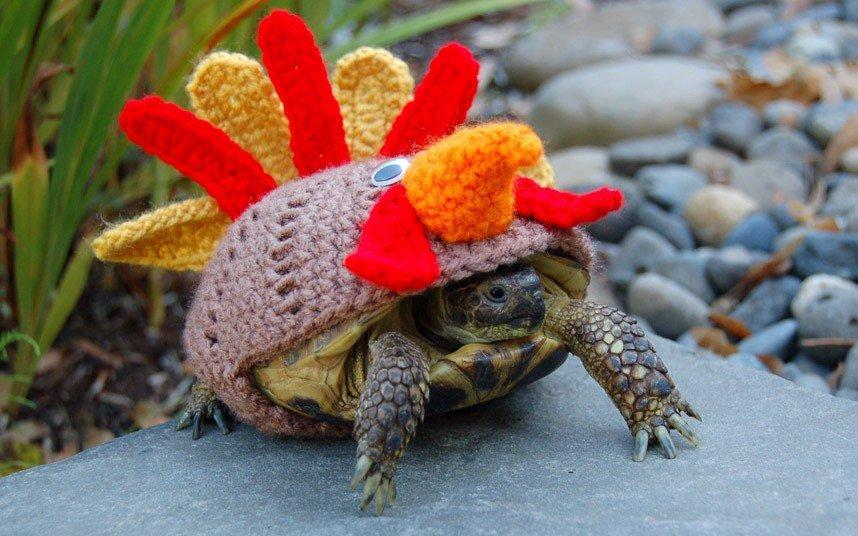 Вязаные костюмы для черепах фото 3, петушок