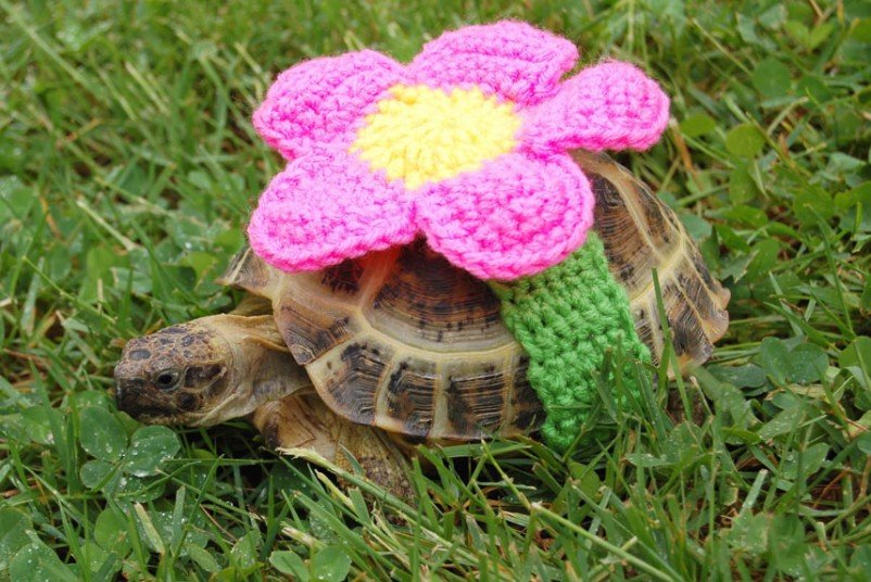 Вязаные костюмы для черепах фото 2, цветочек