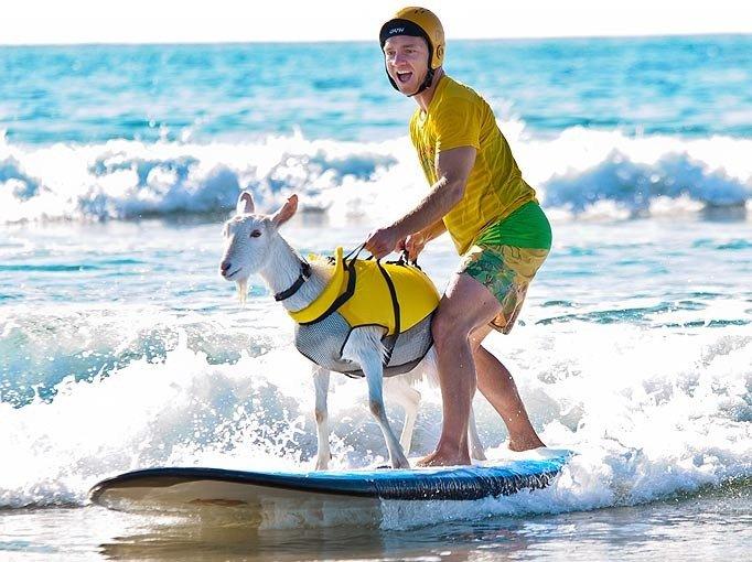 Козел-серфінгіст
