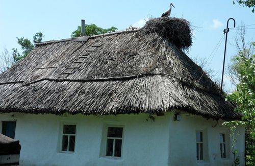 гнездо аиста — оберег