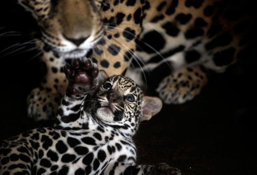 Тварини: мами та їх діти