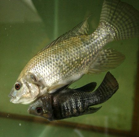 крошечные рыбки