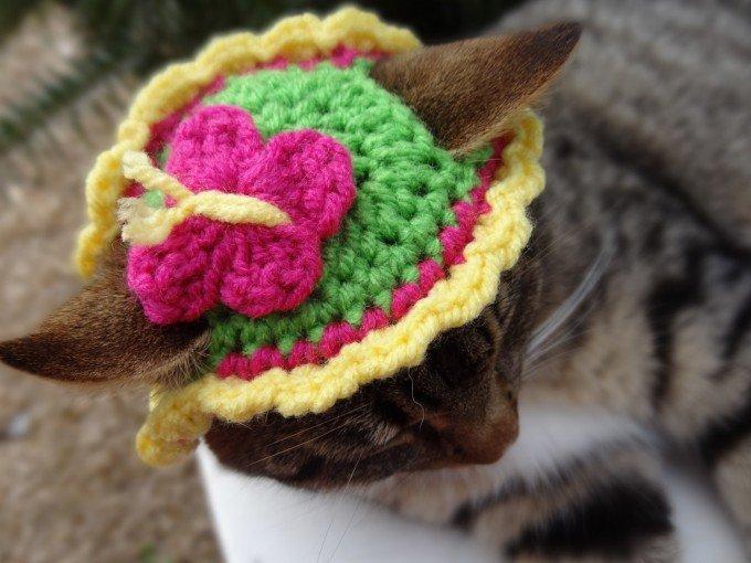 В'язані шапочки для котів від Мерідіт Ярборо