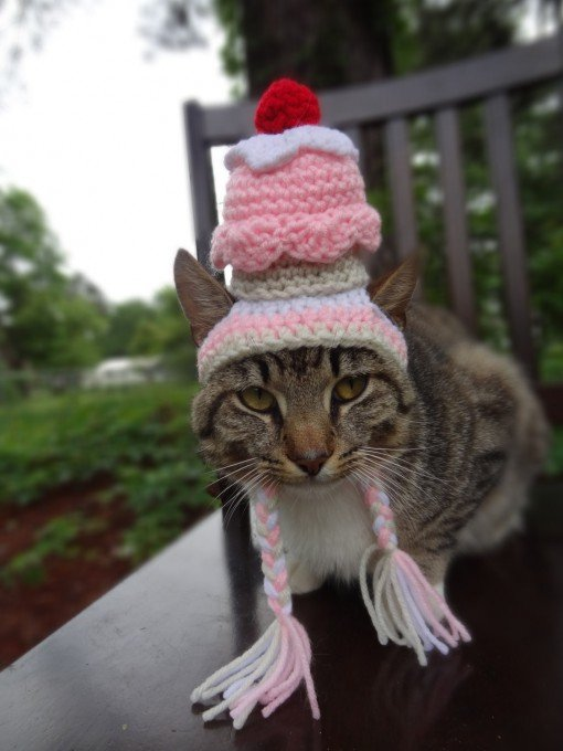 Вязаные шапочки для котов