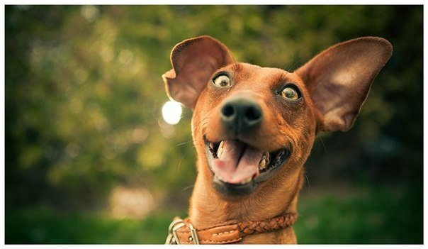 Смішні закони про тварин
