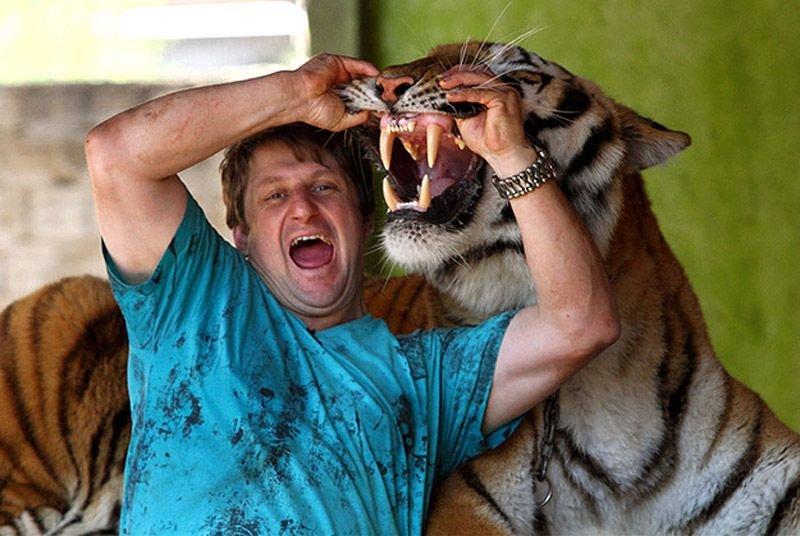 Домашний тигр, фото 3