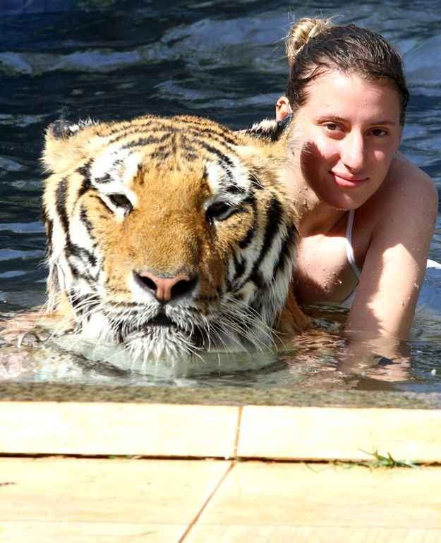 Домашний тигр, фото 2