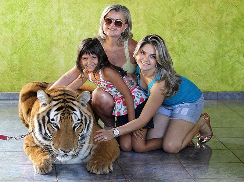 Домашний тигр, фото 7