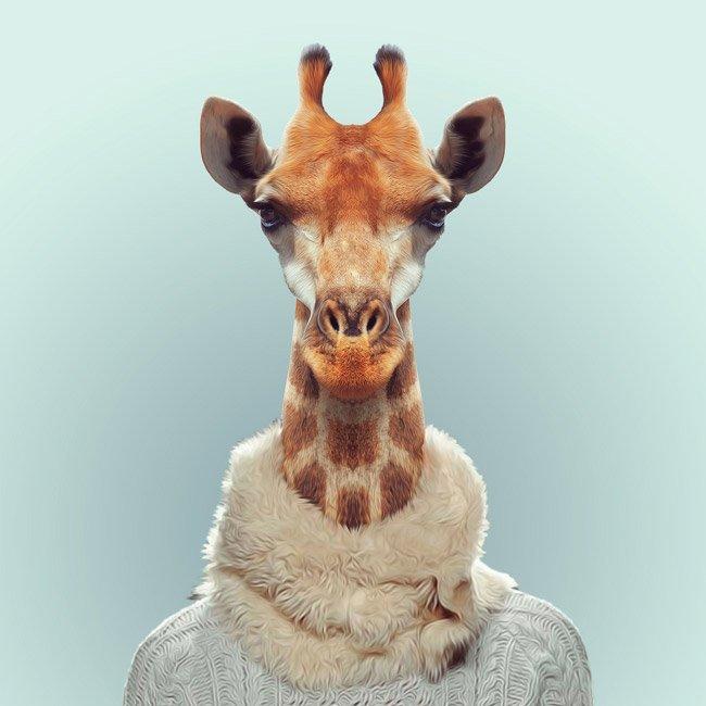 Зоопортрети жирафа