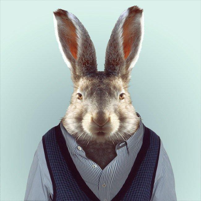 Зоопортрети кролик