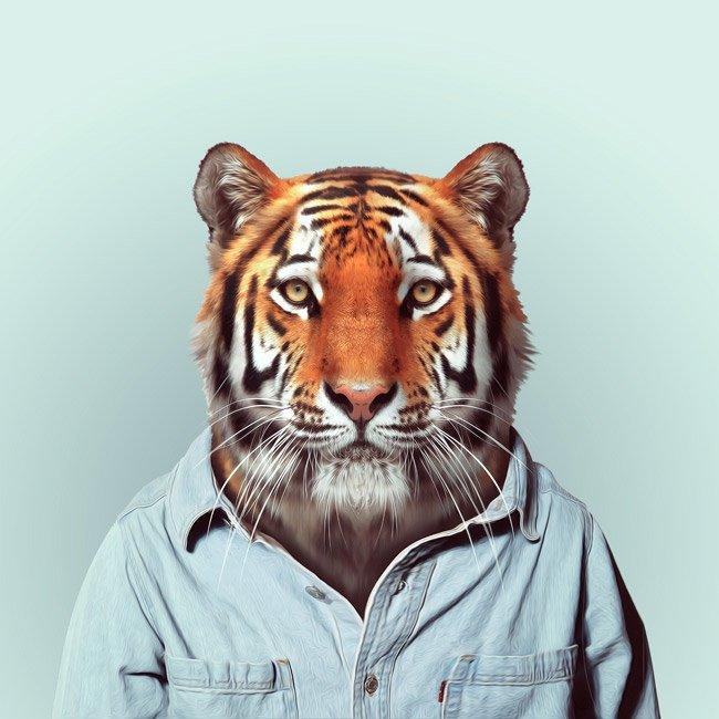 Зоопортрети тигр