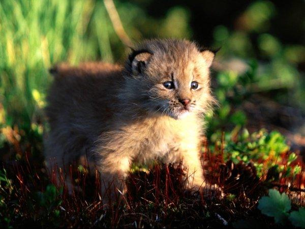 Милі фото дитинчат звірів